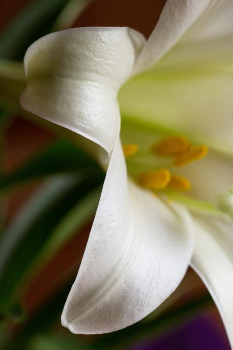 lily-6251web