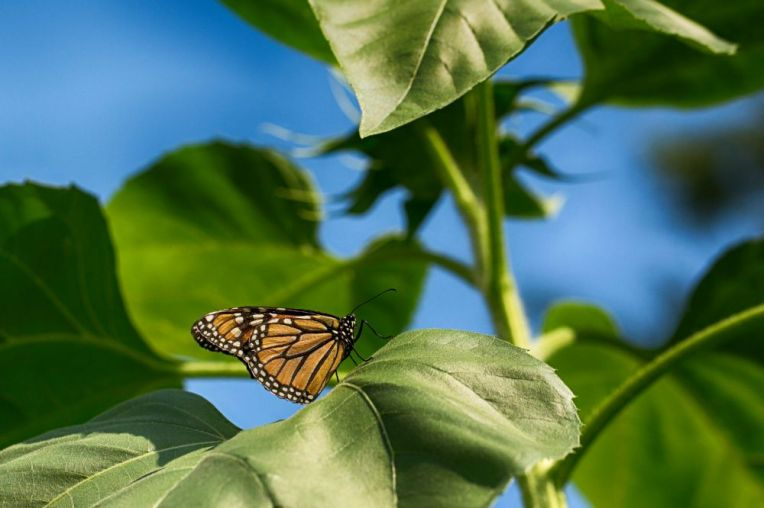 monarch-8438hdr-web