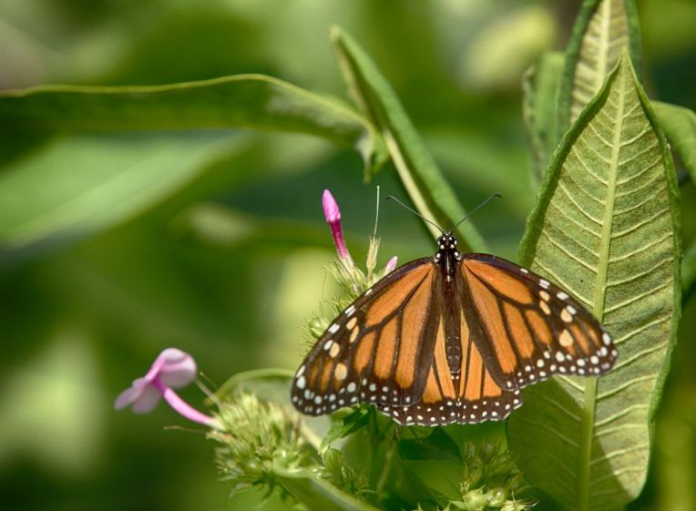 monarch-8477hdrweb