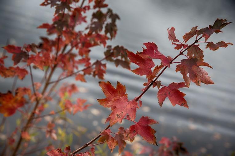 fall2015-9500HDR