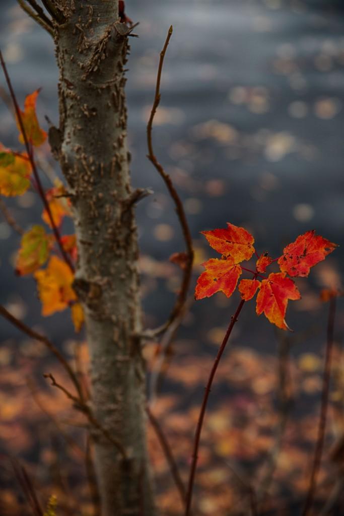 fall2015-9505HDR